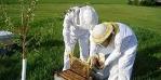 עמק חפר בדבש איכותי