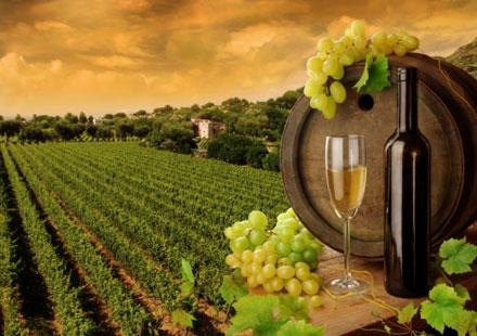 איך מקדמים יין ישראלי בקנדה?