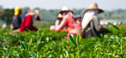 טכנולוגיות חקלאות ישראלית בווייטנאם
