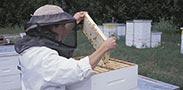 המלצה אביבית: דבש והנאות