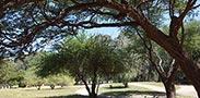 הגן הבוטני ביער אילנות